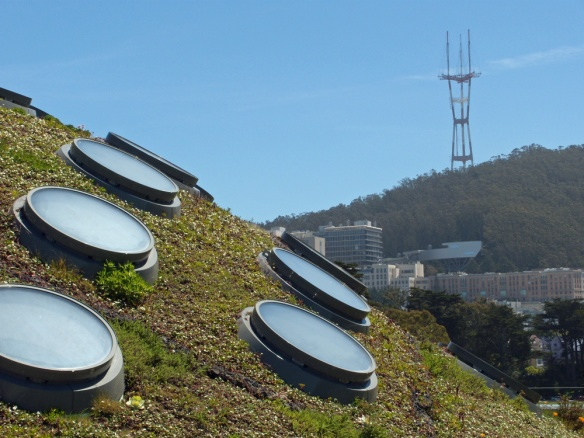 The Port Holes Gather Sunlight On The Living Roof.