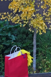 Red Bag and Ginko