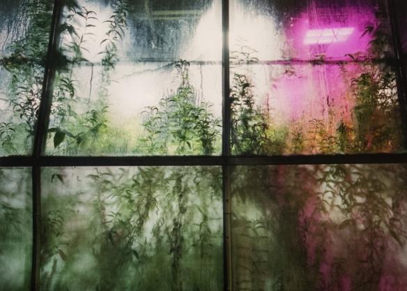 Temporally Tellurian, series 2014 by Ashley Valmere Fischer.