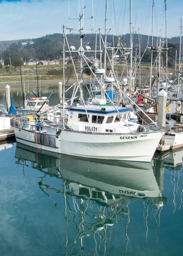 Genesis, Pillar Point Harbor, California, USA