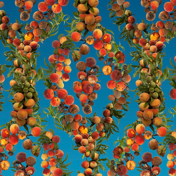 FallenFruit-Everyones-a-georgia-peach