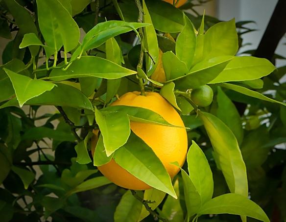 WPC-Pure-Orange-1118