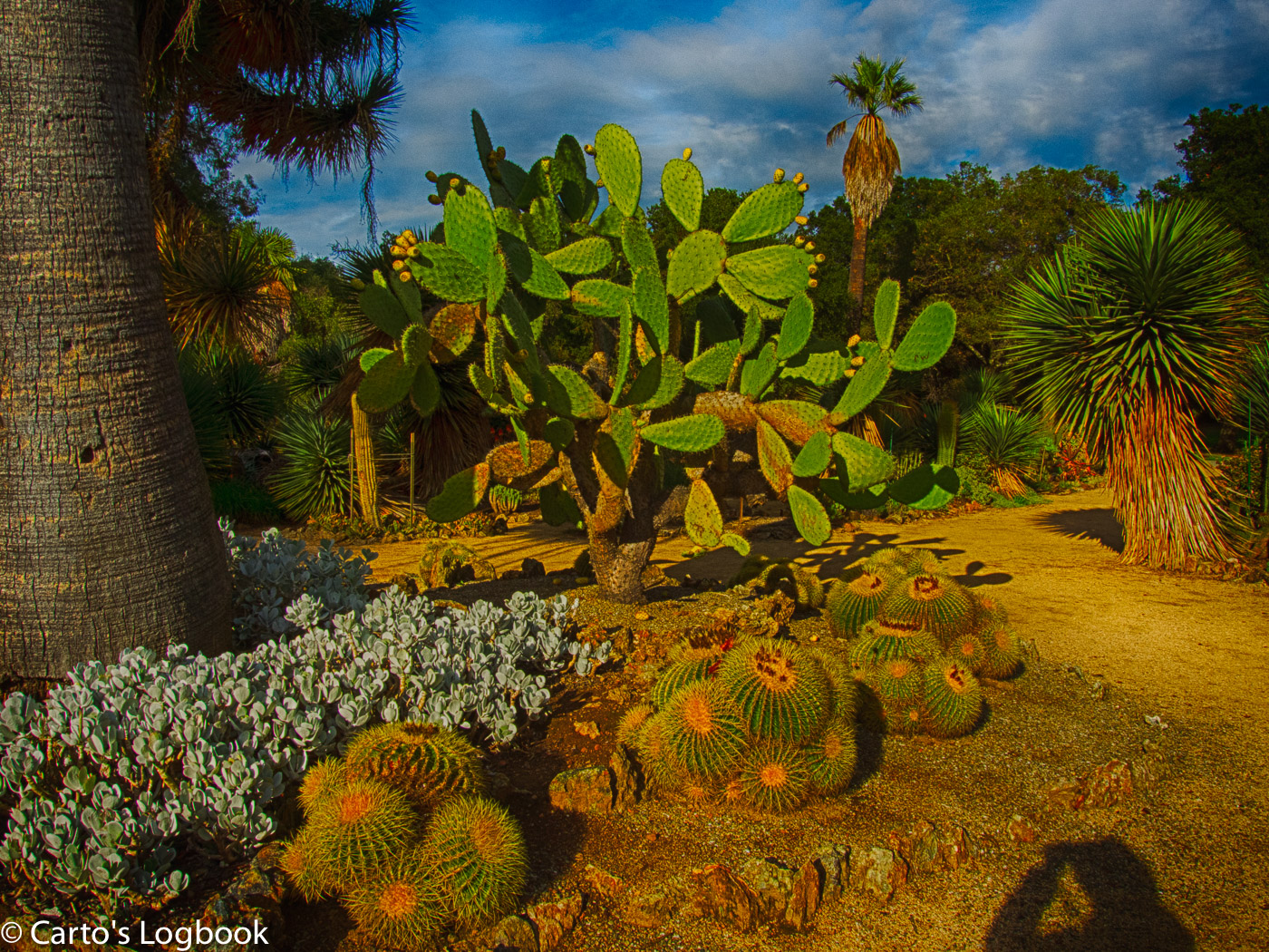 WPC Green 20141208 DSCN0880. Cactus In Bloom, Arizona Garden, Stanford ...