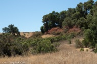 It;s a dry summer in Palo Alto's Arastradero Preserve, july 2018